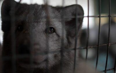 14 år med å dokumentere og avsløre dyrenes lidelse